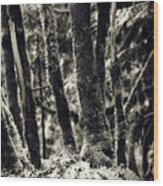 The Silent Woods Wood Print