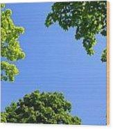 The Sky Through Trees Wood Print