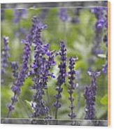 The Smell Of Lavender  Wood Print