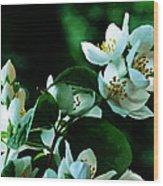 The Soft White Blossom  Wood Print