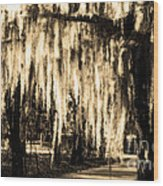 The Spanish Moss Wood Print