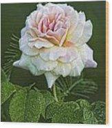 The Splendor Of The Rose Wood Print