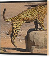 The Spotted Cat Wood Print