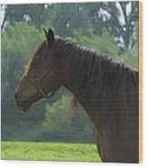 The Stallion Wood Print by Steve K