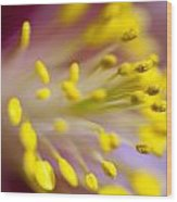The Stamen Of A Flower Wood Print