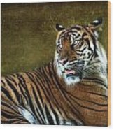 The Sumatran Tiger  Wood Print