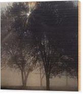The Sun Peeks Through The Branches Wood Print