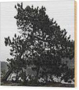 The Sun Seeker Wood Print