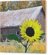 The Sunflower And The Barn Wood Print