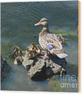 The Swimming Lesson Wood Print