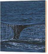 The Tail Flukes Of A Humpback Whale Wood Print