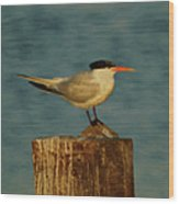 The Tern Wood Print by Ernie Echols
