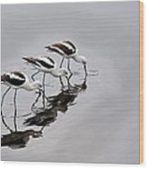 The Three Avocets Wood Print