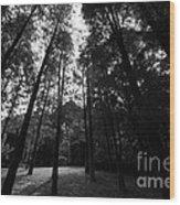 The Trees  Wood Print