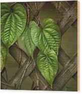 The Trellis Wood Print by Brenda Bryant