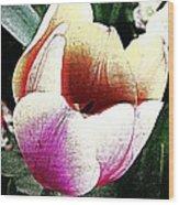 The Tulip Wood Print