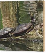 The Turtles Wood Print
