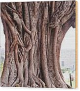 The Twisted And Gnarled Stump And Stem Of A Large Tree Inside The Qutub Minar Compound Wood Print