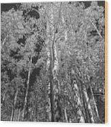 The Two Split Trees Bw Wood Print
