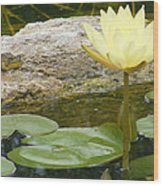 The Water Lily And The Frog Wood Print
