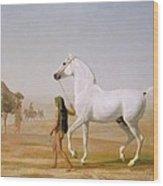 The Wellesley Grey Arabian Led Through The Desert Wood Print