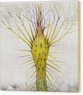 The Yellow Plant Wood Print by Bjorn Eek
