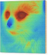 Thermogram Of A Cat Wood Print