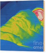 Thermogram Of A Child Sleeping Wood Print