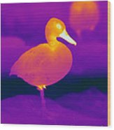 Thermogram Of A Cinnamon Teal Duck Wood Print