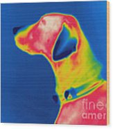 Thermogram Of A Dog Wood Print