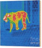 Thermogram Of A Tiger Wood Print