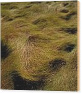 Thick Grasses Blow In The Wind And Form Wood Print