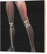 Thigh/lower Limb Abduction Wood Print