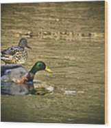 Thin Ice Wet Duck Wood Print