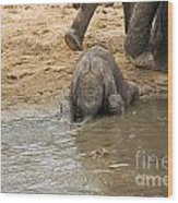 Thirsty Young Elephant Wood Print