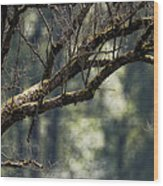 This Is Our World No. 9 - Lets Branch Out Wood Print