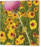 Thistle And Coreopsis 2am-110455 Wood Print