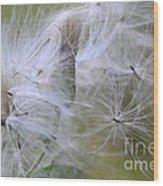 Thistle Seeds Wood Print