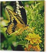 Thoas Swallowtail #1 Wood Print