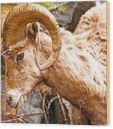 Thompson Falls Ram Wood Print