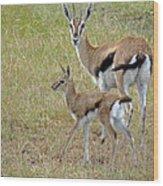 Thomsons Gazelle Wood Print