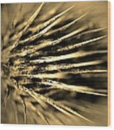 Thorny In Sepia Wood Print