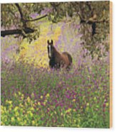 Thoroughbred Horse Among Wildflowers In The Chittering Valley, Western Australia Wood Print by Peter Walton Photography