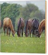 Thoroughbred Horse, Ireland Wood Print