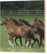 Thoroughbred Horses, Ireland Wood Print