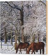 Thoroughbred Horses, Mares In Snow Wood Print
