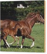 Thoroughbred Mare And Foal Galloping Wood Print