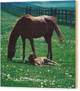Thoroughbred Mare And Foal, Ireland Wood Print