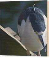 Thoughtful Bird Wood Print