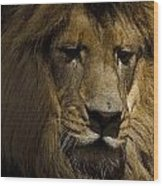 Thoughtful Lion Wood Print